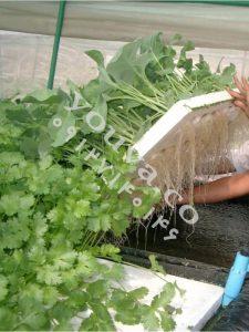کانکس کشاورزی-06